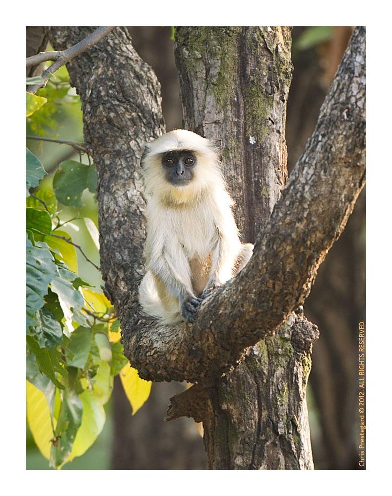 Monkey1268_Jan25-2012