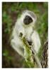 Monkey6065B_Apr21-2011