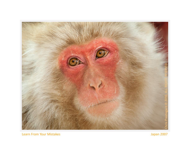 Monkey67-Apr19-2014