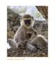 Monkey7267_9-15-07
