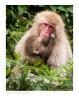 Monkey8575_9-15-07