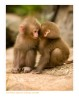 Monkey8600_9-15-07