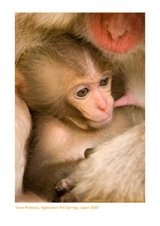 Monkey9361_9-15-07