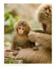 Monkey9386b_9-1-07