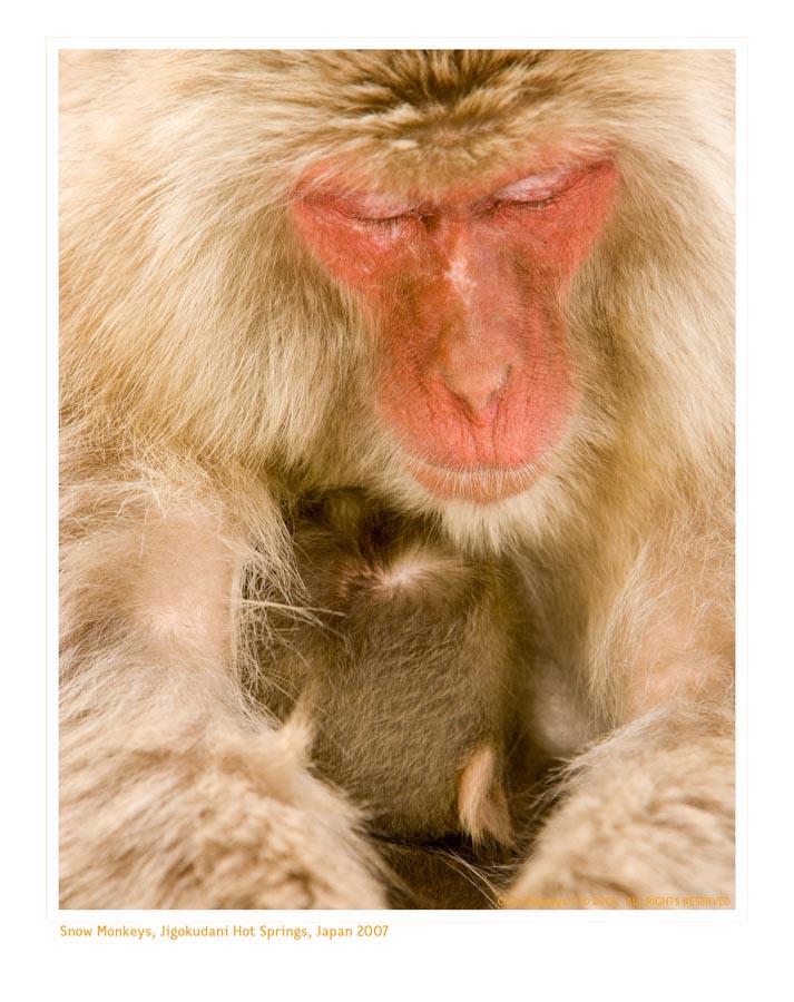 Monkey9435_9-15-07