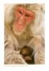 Monkey9528_9-15-07