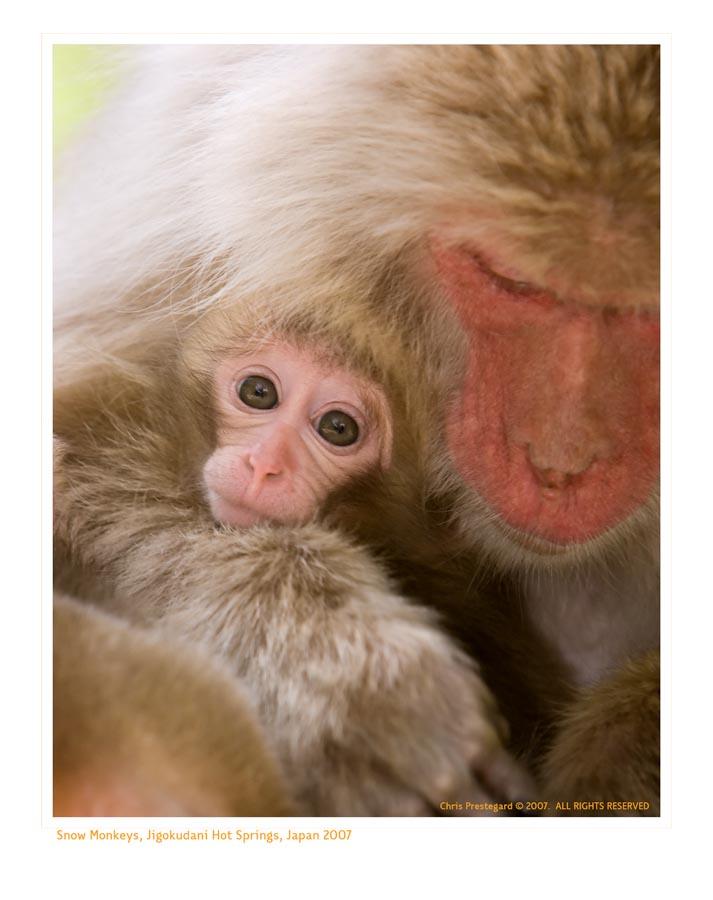 Monkey9913_9-15-07