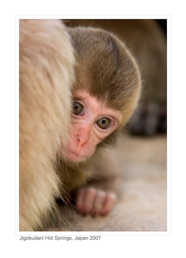Monkey9927_9-14-07