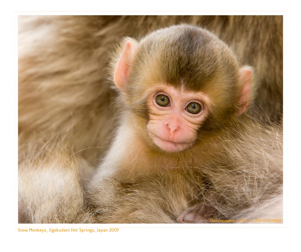 MonkeySmile9984_9-15-07