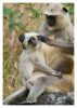 Monkeys2636_Jan23-2012
