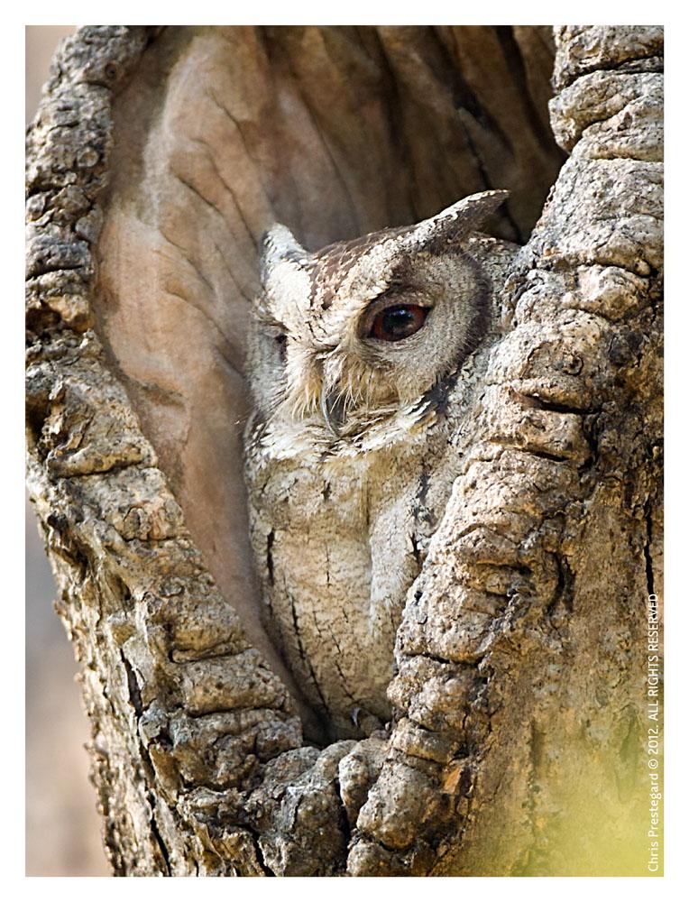 Owl1319_Jan23-2012