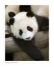 Panda3636_9-15-07