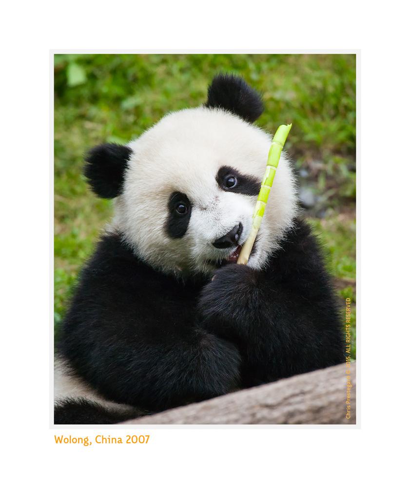 Panda3740-Oct14-2015
