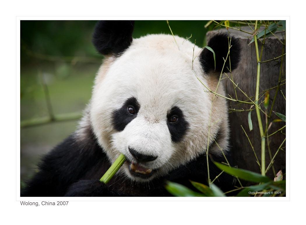 Panda4181_9-14_07