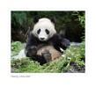 Panda4883_9-15-07