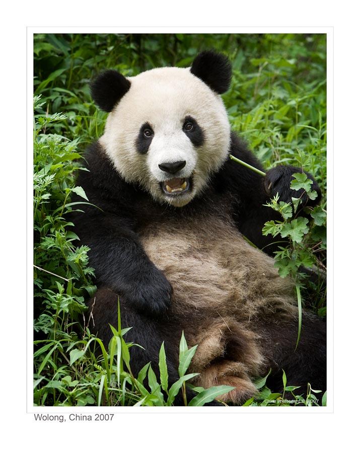 Panda6250_9-14-07