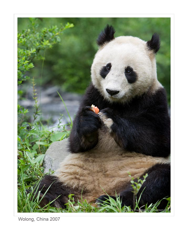 Panda6433_9-14-07
