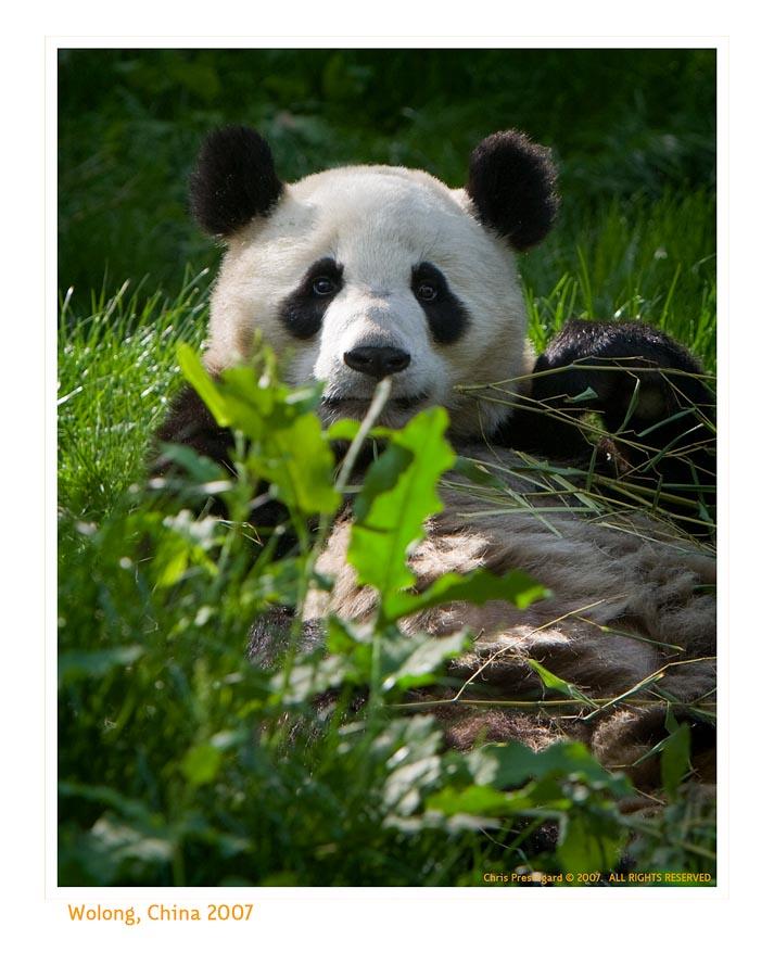 Panda6749_9-14-07