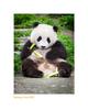 Wildlife Rhythms ™ in Wolong, China 2007