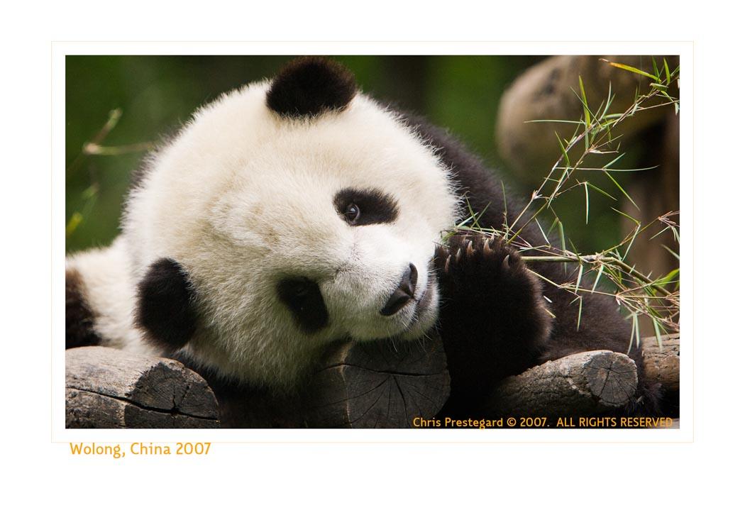 Panda7341_9-17-07