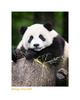 Wildlife Rhythms ™ in Wolong, China June 2007