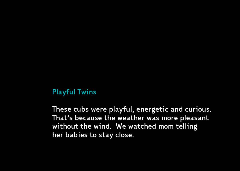 PlayfulTwinsC