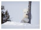 PolarBear4857-May17-2012