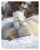 PolarBear5062-May19-2012