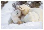 PolarBear5098_May16_2012