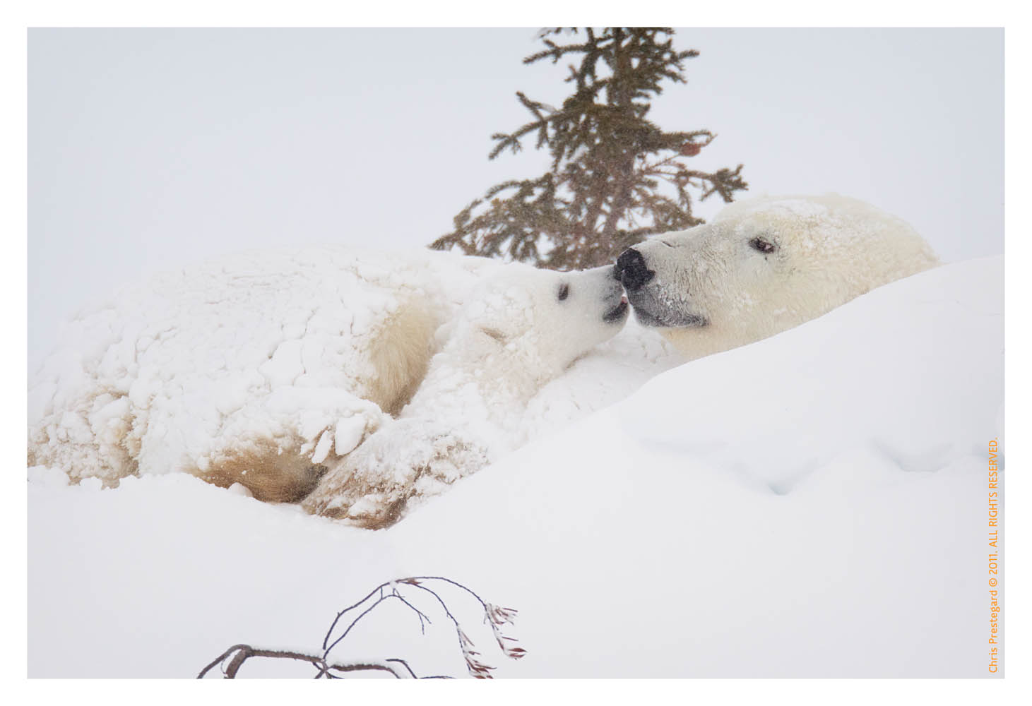 PolarBear5749B_Apr22-2011