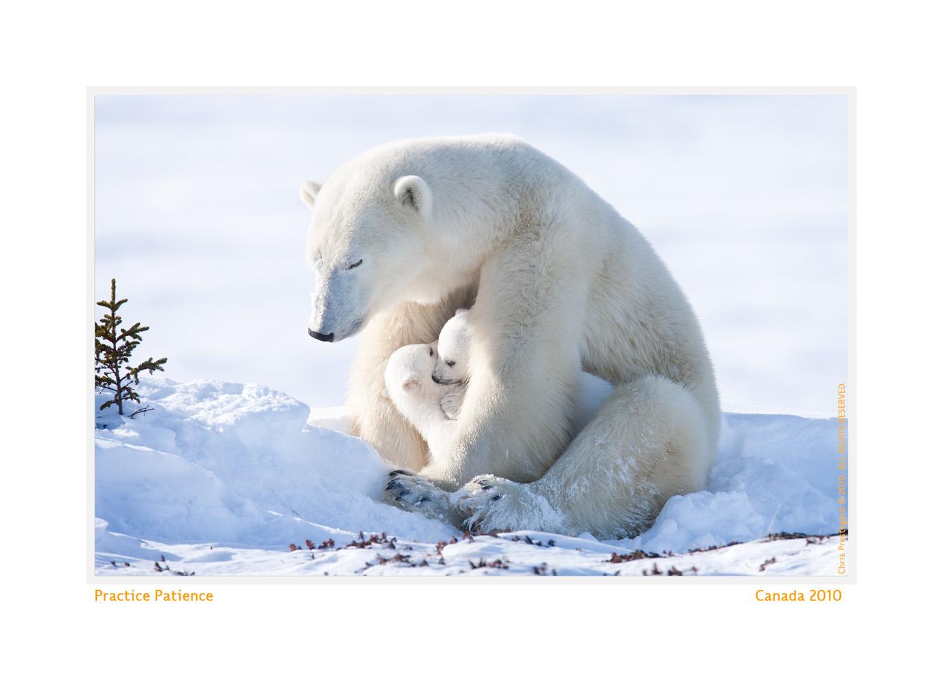 PolarBear6872-Oct5-2013