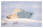 PolarBear7048-May17-2012
