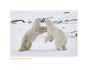 PolarBearBreathe6891_Nov24-08