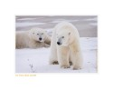 PolarBearDont6640_Nov24-08
