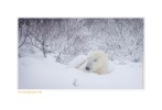 PolarBearFreeze7617b_Nov25-08