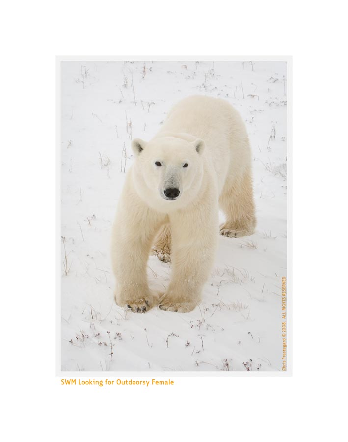 PolarBearSingle5366_Nov24-08