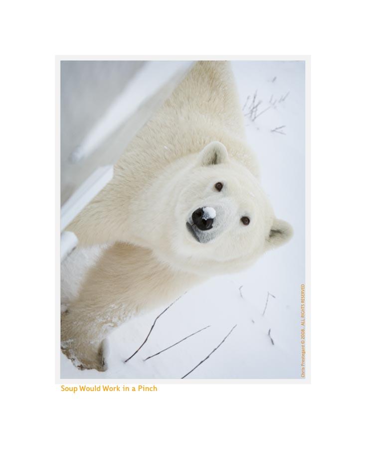 PolarBearSoup5114b_Dec16-08