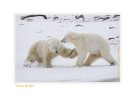 PolarBearsBad6868_Nov24-08