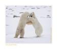 PolarBearsEven6853_Nov24-08
