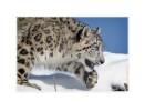 SnowL6674_Mar18_08