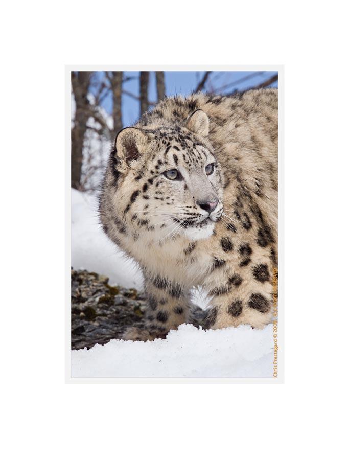 SnowL7708_R_Mar14_08