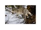 SnowL8853_L_Mar14_08