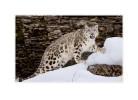 SnowL8920_O_Mar14_08