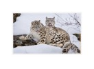 SnowL8987_X_Mar14_08