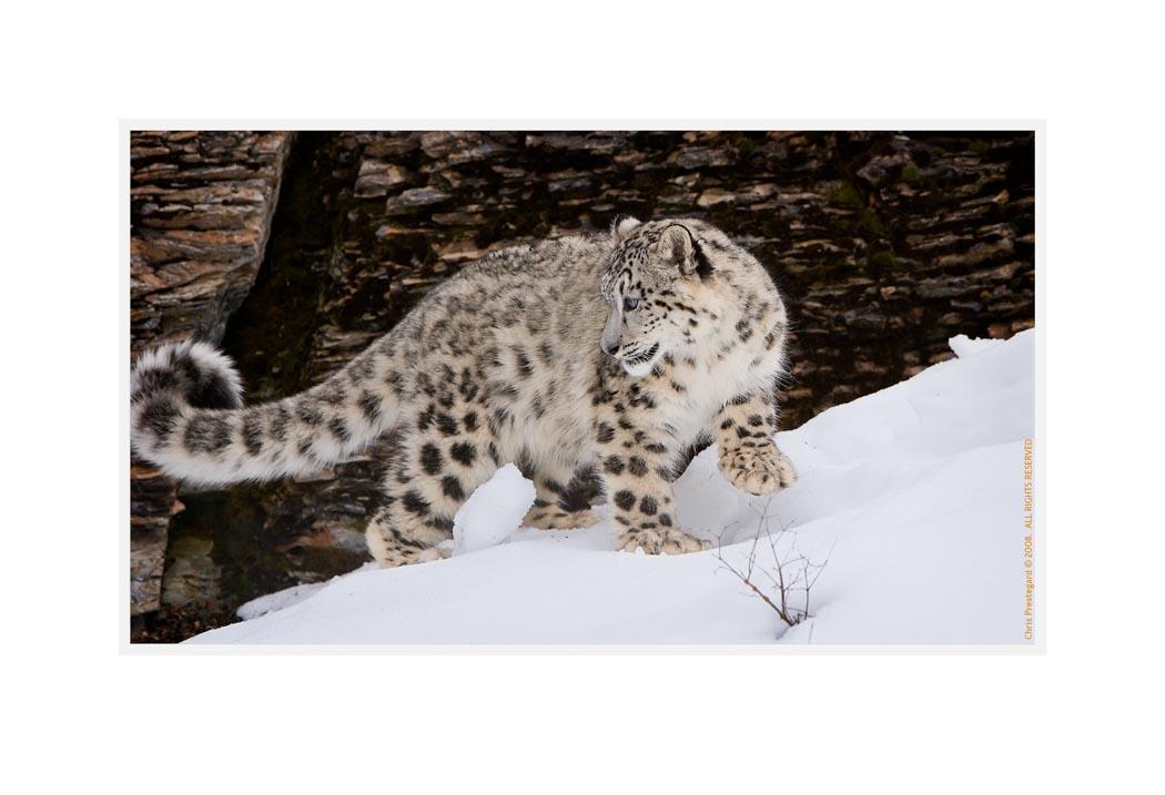 SnowL9057_H_Mar14_08