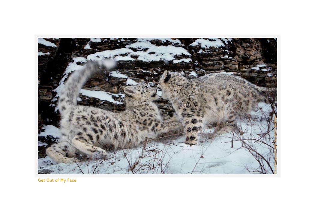 Wildlife Rhythms ™ Triple D, Montana, Dec. 2007