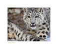 Wildlife Rhythms ™ TripleD, Montana, Dec07