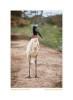 Stork6587_Aug18-09