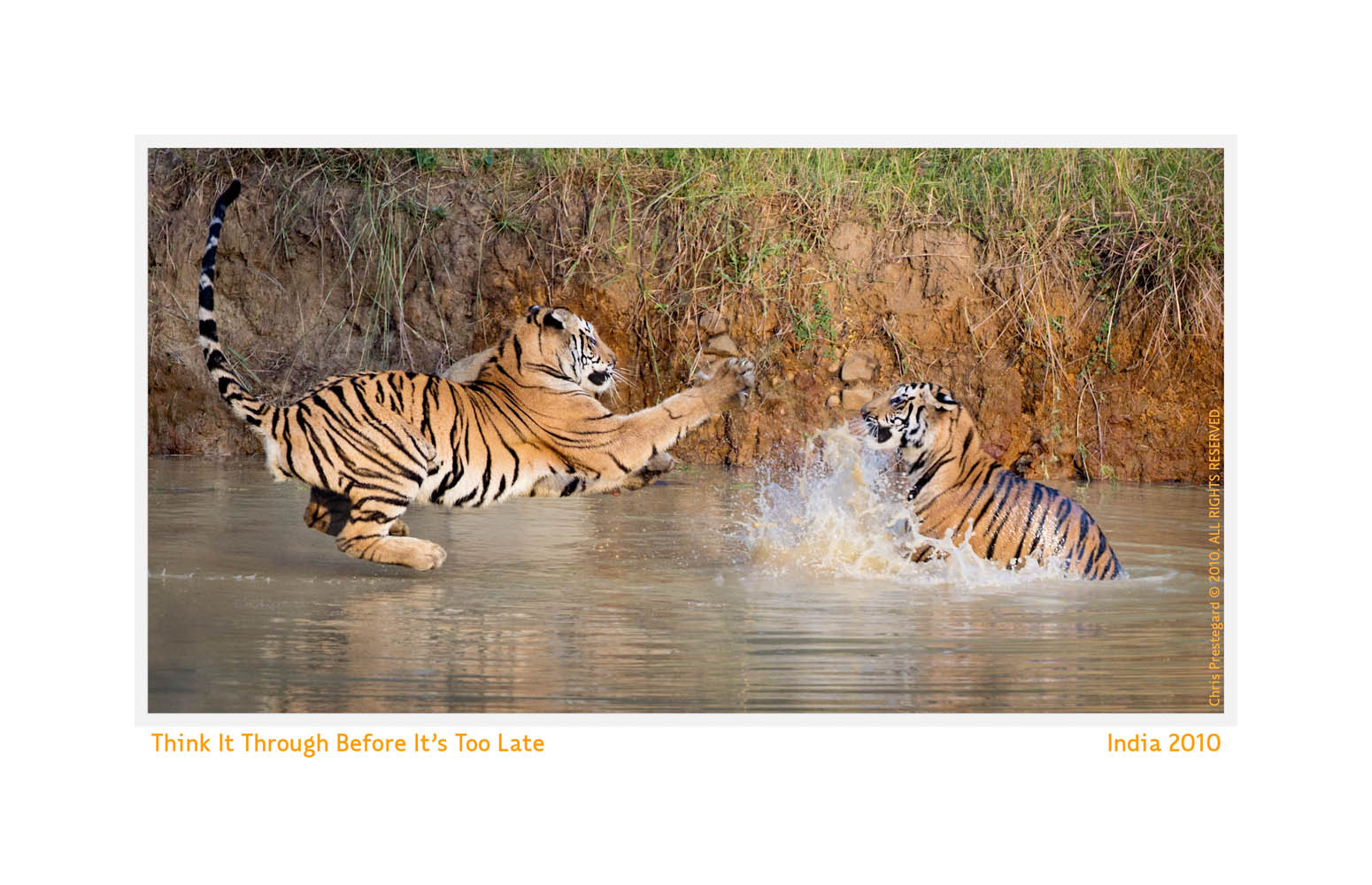 Tiger6320-Oct14-2013