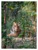 Tiger6364-Nov28-2010